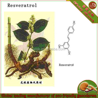 Natural Giant Knotweed Extract 20 % 50% 98% Resveratrol Plant Extract Powder