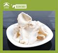 vietnam secos oyster setas