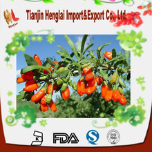 fresh goji berries for goji berry powder & himalayan goji juice