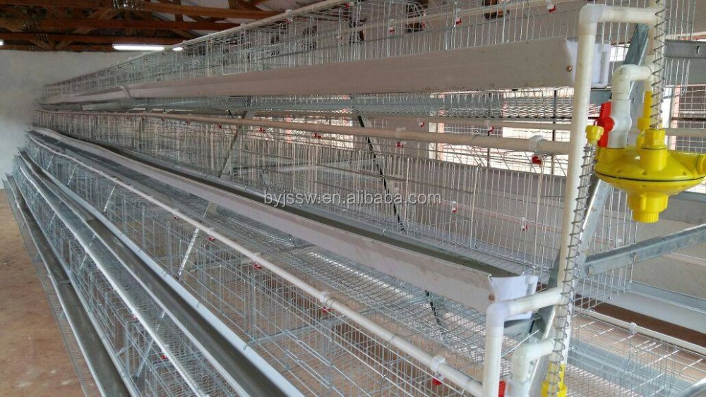 chicken cage-385-.jpg