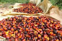 price of palm kernel oil competitive price
