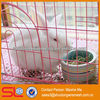 non- galvanized stainless steel welded rabbit cage wire mesh
