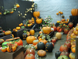 real touch high quality lifesize artificial pumpkin fruit