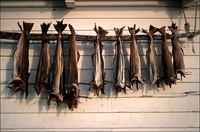 Denish Dried Stock Fish,cod,haithe,haddock, Dried Stock fish heads