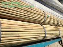 Solid dry straight cheap tonkin bamboo canes,Tsinglee bamboo poles,bamboo stakes 20-22mm for the orchard for sales