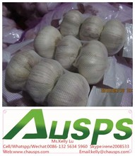 high quality agriculture wholesale china natural garlic offer