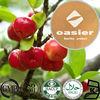 Organic Acerola Cherry Extract