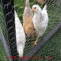Chicken Mesh Dog Cage