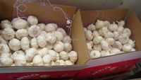 Garlic in China