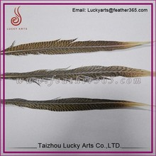 Taizhou lucky arts 2015 hot sale Newest dyed pheasant feathers