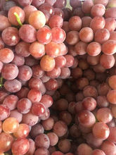 2015 best fresh grape with reasonable price