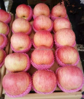 Sweet fresh Qinguan Apple fruit from China