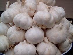 fresh China normal white garlic for sale (mesh bag/carton)
