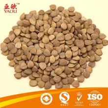 Abricot grains de