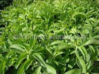 100%pure natural high quality sweetener Stevia wholesale,Stevia extract in bulk/99% Rebaudioside A, Stevioside