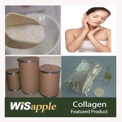 GMP Manufature supply fish source Collagen powder