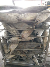 New Stock Best Quality Frozen Seafoods Skipjack Tuna