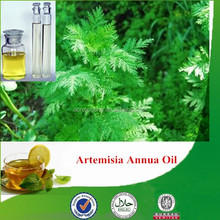 100% natural & pure artemisia annua oil, wormwood essential oil with superior quality, wormwood extract