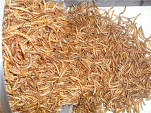 Application for Small Animals Dehydrated Mealworm Reptile Food, Mealworm Chicken Feed