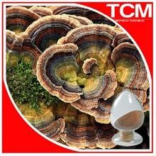 Yunzhi mushroom extract / Coriolus versicolor P.E (100% Competitive price)