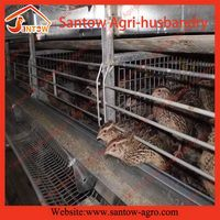 Designer latest automatic metal wire mesh quail cage