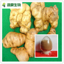 GMP certificated rehmannia glutinosa extract