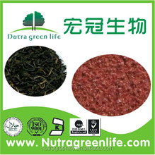 Best Quality and Pure Instant Black Tea Extract