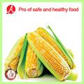 envasado al vacío de mazorca de maíz dulce