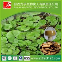 High quality natural radix notoginseng extract powder
