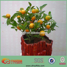 decorative hydrogel clay soil for plants