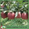 Huaniu apple cartons packaging