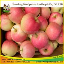 Chinese new corp bulk fresh apples