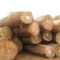 UNSAWN ROUND TIMBER WOOD LOGS/PINE WOOD LOGS/TEAK WOOD FOR SALE