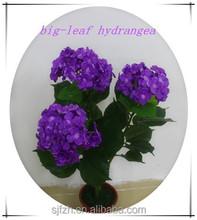 2015 popular fashion style flowers artificial hydrangea flowers big-leaf hydrangea for wedding decoration