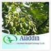 ISO&Kosher 95%~98% Quercetin powder /Rutin sophora japonica l Extract