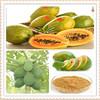bromelain and papain/papain extract/papaya papain