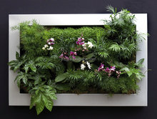 SL111 living vertical garden with wall planter