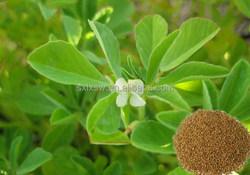 Top quality branded fenugreek extract furostanol saponins