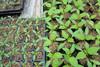 manual potato planter for sales