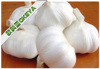 Pure white,hot sell Chinese fresh garlic