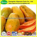 carica papaya fermentada extracto de hoja de polvo