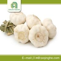 New corp fresh nature garlic