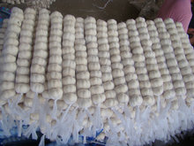 2015 New Crop Chinese Fresh Garlic Normal White Garlic
