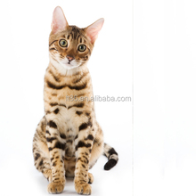 Latest Arrival Various Design making craft stuffed bengal cat