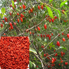 Chinese ningxia high quality sale whole foods pure bulk natural wolfberry red air dried goji berry,low goji berry price