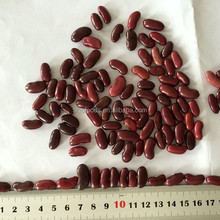 Dark Red Kidney Beans Northern China and Dark Red Kidney