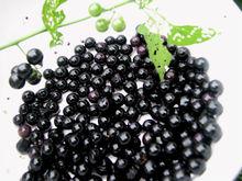 Good Quality Black Night Shade Solanum Nigrum / Makoi