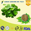 Pharmaceutical Raw Material Improving Blood Circulation Centella Asiatica Extract