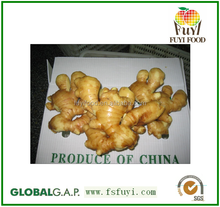 Fresh ginger with good price in your market