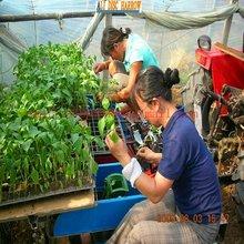 Verduras transplantadora máquina de plantación verduras 2014 caliente venta